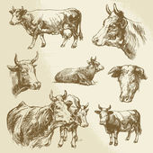 Cows, farm animal - hand drawn collection — Stock Vector
