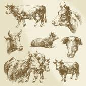 Cows, farm animal - hand drawn collection — Stockvector