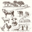 Farm, cow, agriculture - hand drawn collection — Stock Vector #65240547