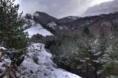 La nieve — Foto de Stock