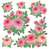 Bouquets of roses — Stock Vector
