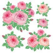 Set of roses — Stock Vector