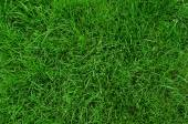 Backgroung of green grass — Stock Photo