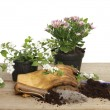 Bedding plants and garden tools — Stock Photo #72742927
