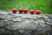 Cherries on a tree bark — Stock Photo