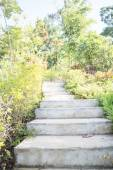 Garden outdoor pathway step up — Stock Photo