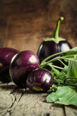 Harvest of Eggplants — Stock Photo