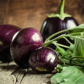 Harvest of Round Eggplants — Stock Photo