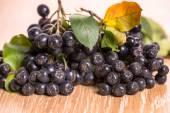Choke-berry (aronia) - branch with berries — Stock Photo