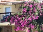 Casa da flor — Fotografia Stock