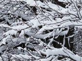 Snow and mountain — Stock Photo
