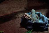 Iguana — Fotografia Stock