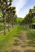 Green labyrinth — Stock Photo
