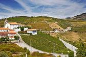La región del douro, portugal — Foto de Stock