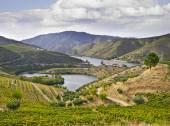 Beautifu landscape in the Douro region — Stock Photo