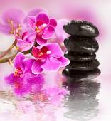 Beautiful gorgeous orchid and wet stones — Stock Photo