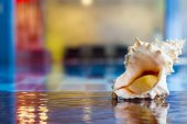 Swimming pool and shell — Stockfoto