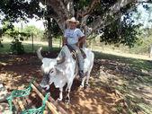 çiftçi — Stok fotoğraf