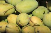 Closeup of a small group of mangoes, some still green and some m — Stockfoto