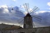 Windmill of saline of trapani — Stock Photo