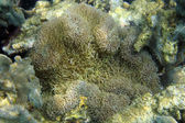 Hard corals on a reef — Stock Photo