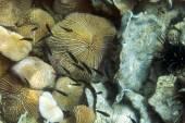 Exotic marine life — Stock Photo