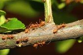 Group ant walking on tree — Stock Photo
