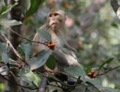 Monkey on tree — Stock Photo