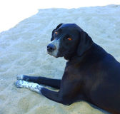 Black street dog resting on sand — Stockfoto