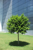 Planted tree in front of  a glass building — Stock Photo
