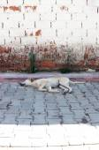 Sleeping street dog — Stockfoto