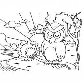 Owls Coloring Pages vector — Stock Vector