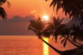 Tropical beach with palm trees at sunset — Stock Photo