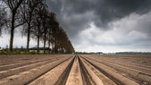 Plough agriculture field after sowing — Stock Photo