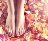 Beautiful legs with flower petals — Stockfoto