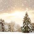 Winter nature landscape — Stock Photo #58822469