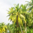 Green palm trees — Stock Photo #69579957