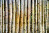 Natural bamboo background — Stock Photo