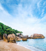 Exotic palm forest, beach and rocks — Stock Photo