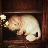 Pelzigen Katze ruht auf dem Regal — Stockfoto