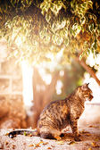 Beautiful tabby cat sitting under the tree — 图库照片