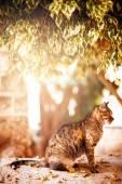 Beautiful tabby cat sitting under the tree — Stockfoto