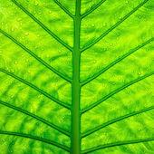 Bouchent texture feuille verte — Photo