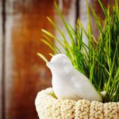 Easter background with cute white bird — Stock Photo