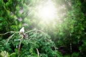 White dove sitting on tree — Stock Photo