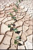 粘土地盤の亀裂 — ストック写真