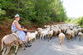 Woman on a donkey with his flock of sheep and goats — Stock Photo