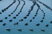 Open water fish farm — Stock Photo