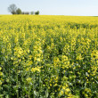 Field under Blue Sky — Stock Photo #59949629