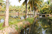 River of the backwaters at Kollam — Stock Photo